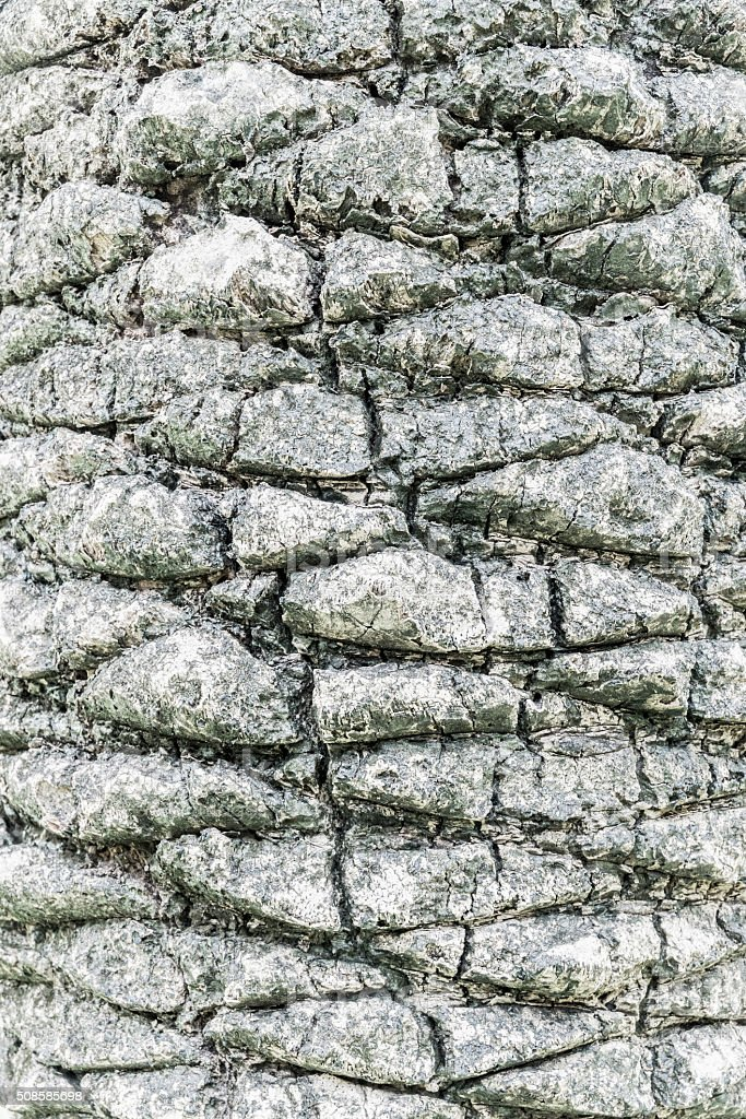 Árbol de corteza foto de stock libre de derechos