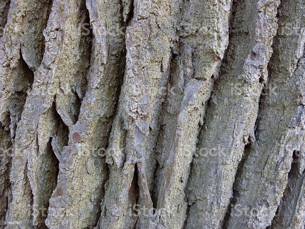 tree bark royalty-free stock photo