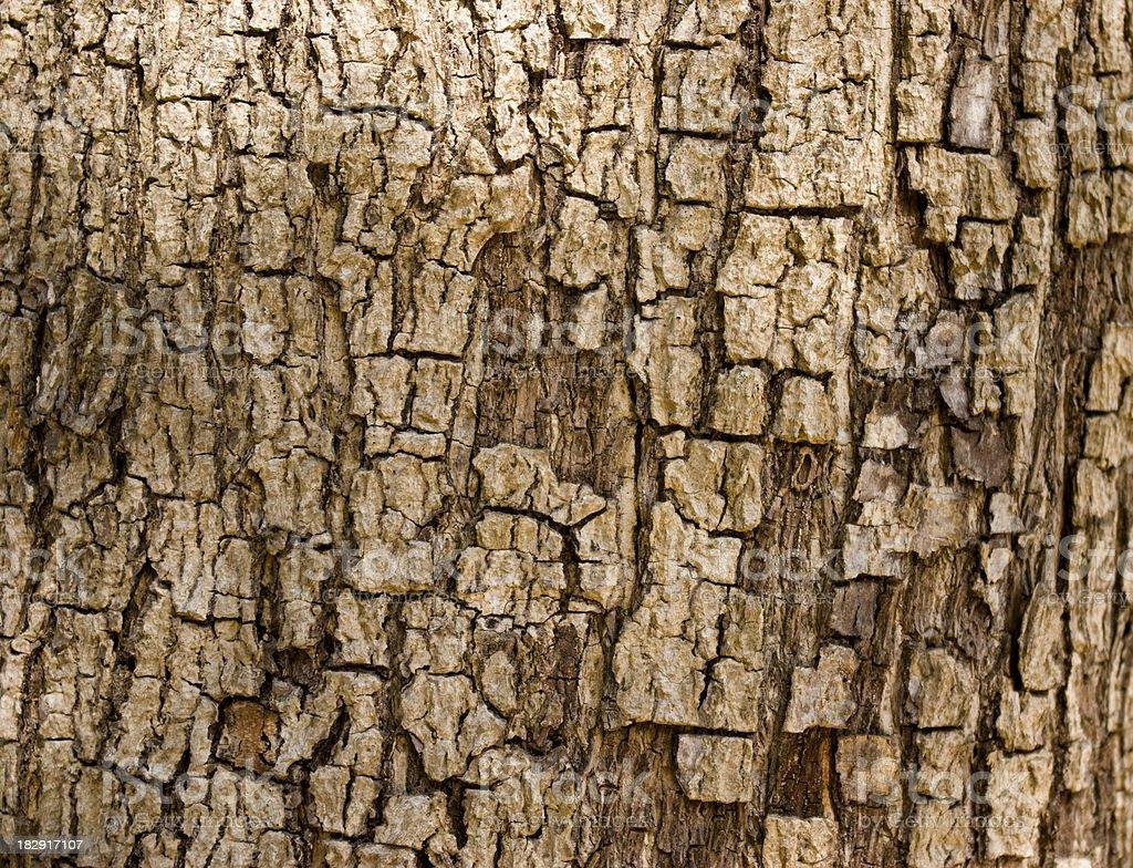 tree bark rough abstract royalty-free stock photo