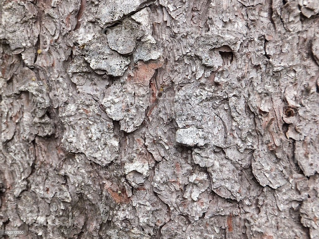 Tree bark surface background stock photo