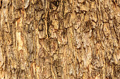 Tree bark surface texture.