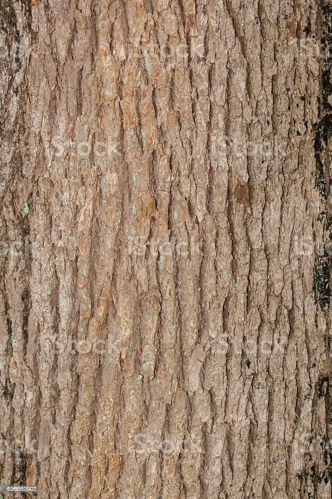 Tree bark texture natural background. stock photo