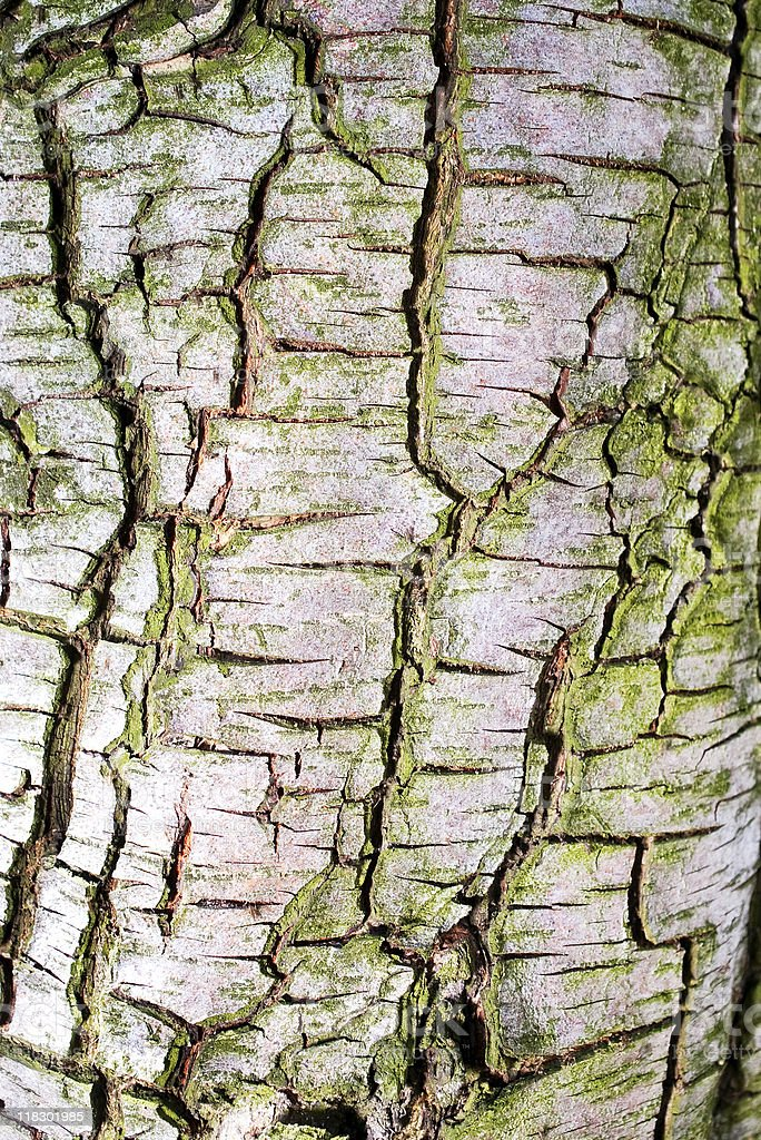 tree bark texture stock photo