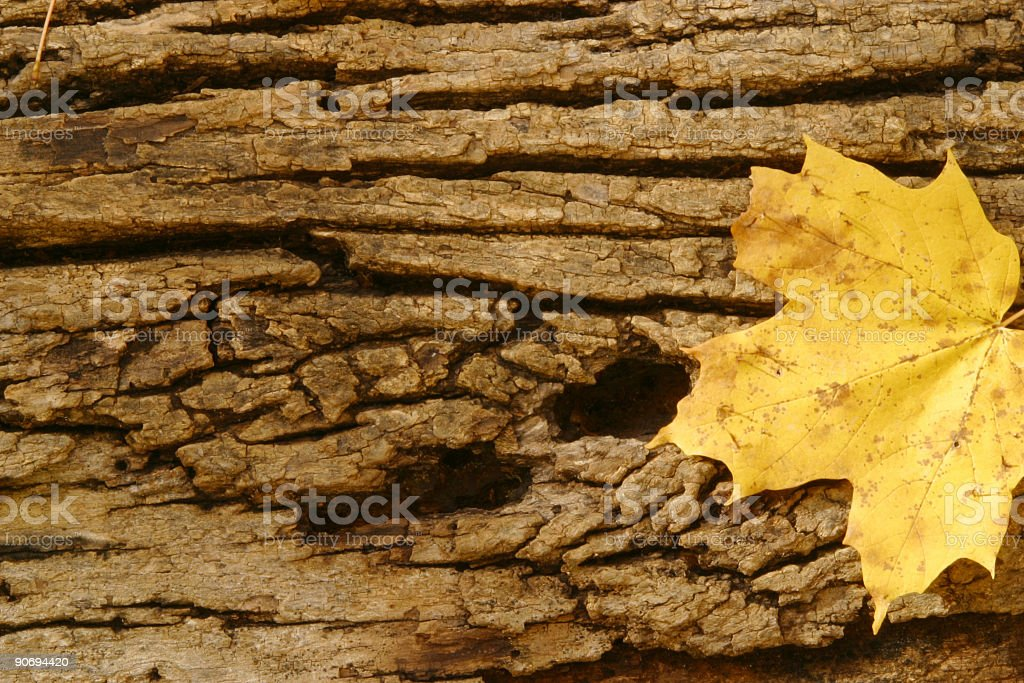 Tree Bark Texture With leaves royalty-free stock photo