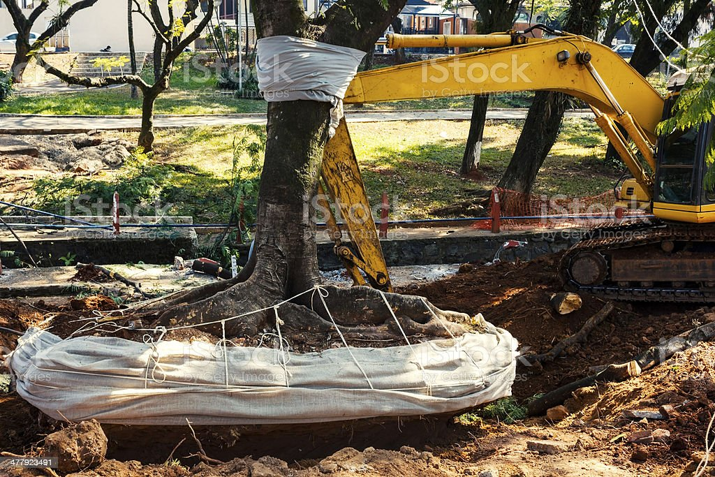 Tree being removed from the ground stock photo