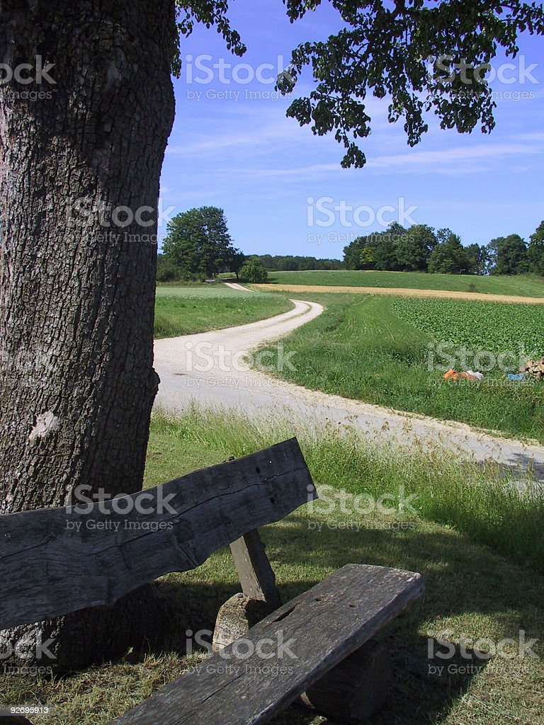 tree, bench and street stock photo