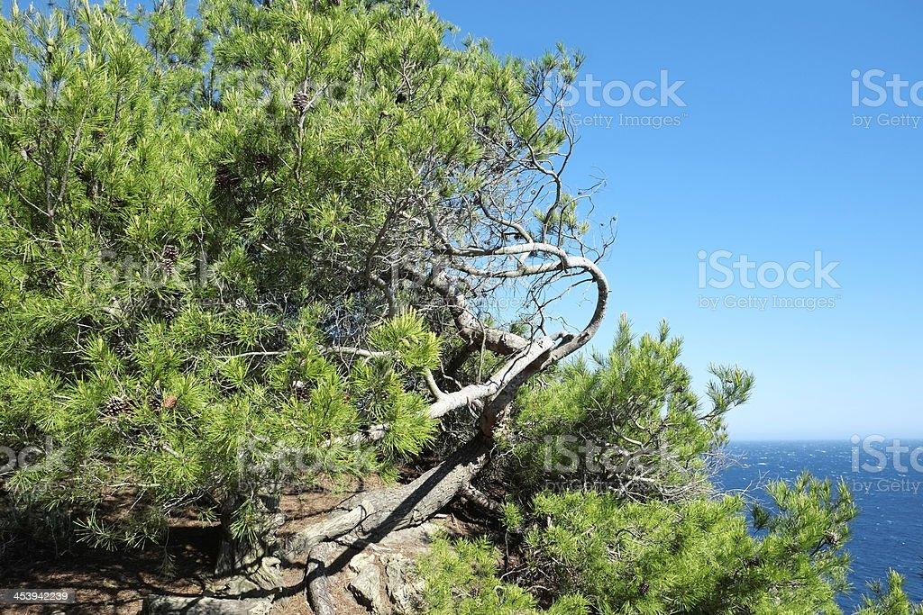 Tree bent backwards royalty-free stock photo