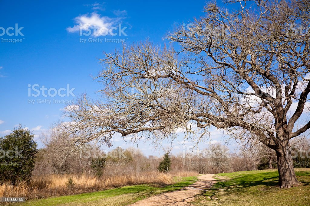 Tree beside a path royalty-free stock photo