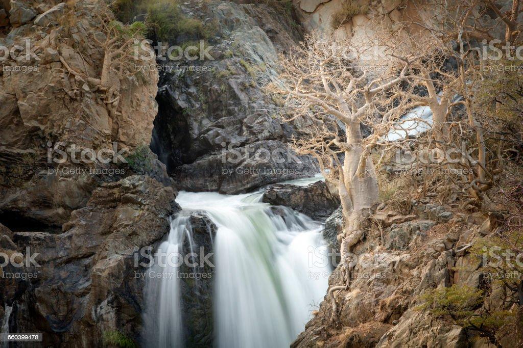 A tree beside the mighty Epupa Falls, Namibia. stock photo