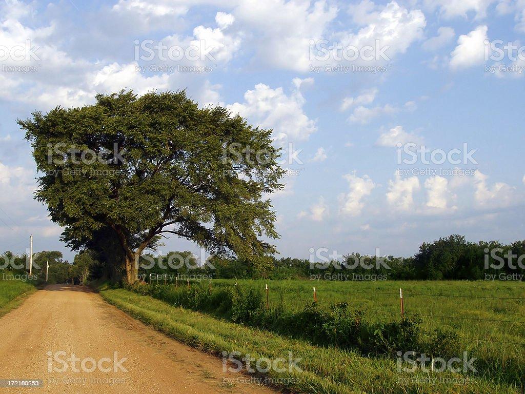 Tree & big blue sky stock photo