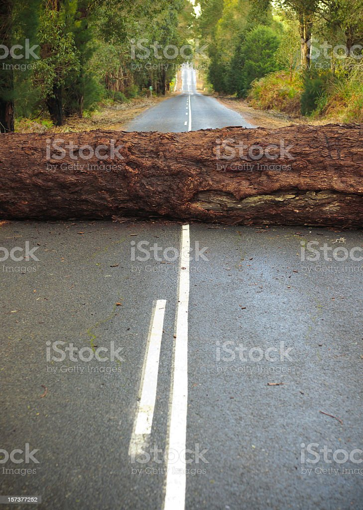 Tree Blocking the Road stock photo