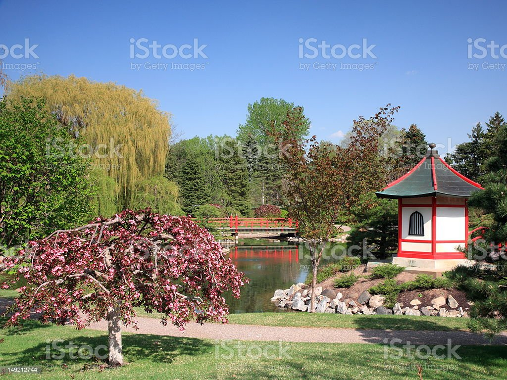 Tree blooming in Japanese garden stock photo