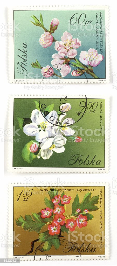 Tree blossom collectible post stamps royalty-free stock photo