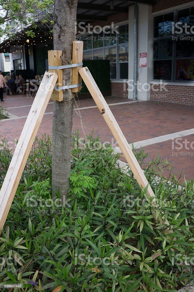 Tree Braced with Wood stock photo