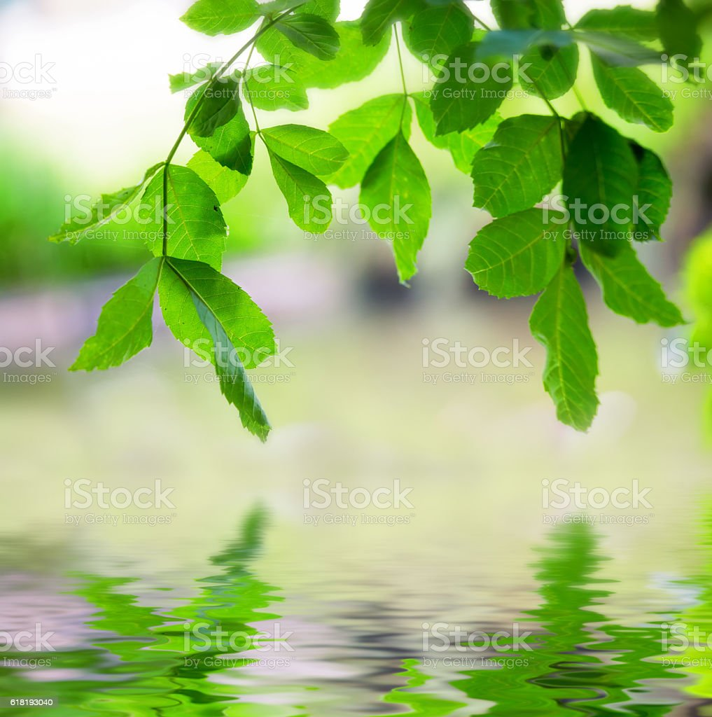 tree branch above the water stock photo