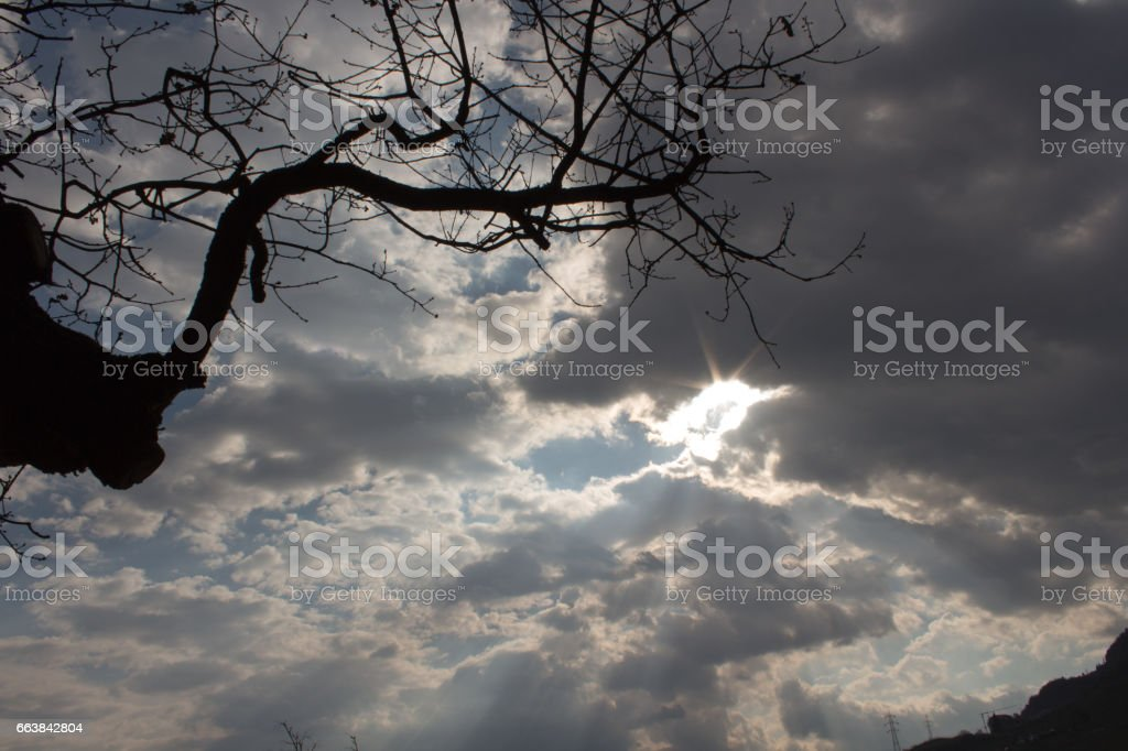 Tree branch against cloudy sky with sun stock photo