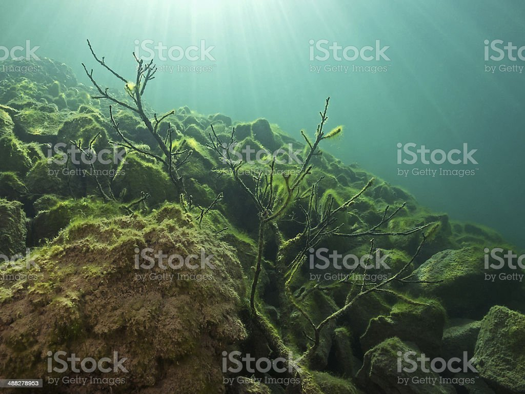 Tree branch and stones covered with algae underwater stock photo