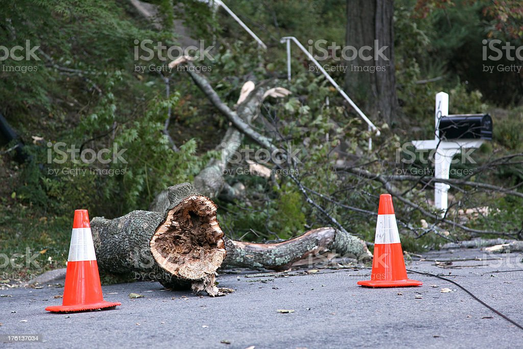 Tree Branch and Traffic Cones On Street stock photo