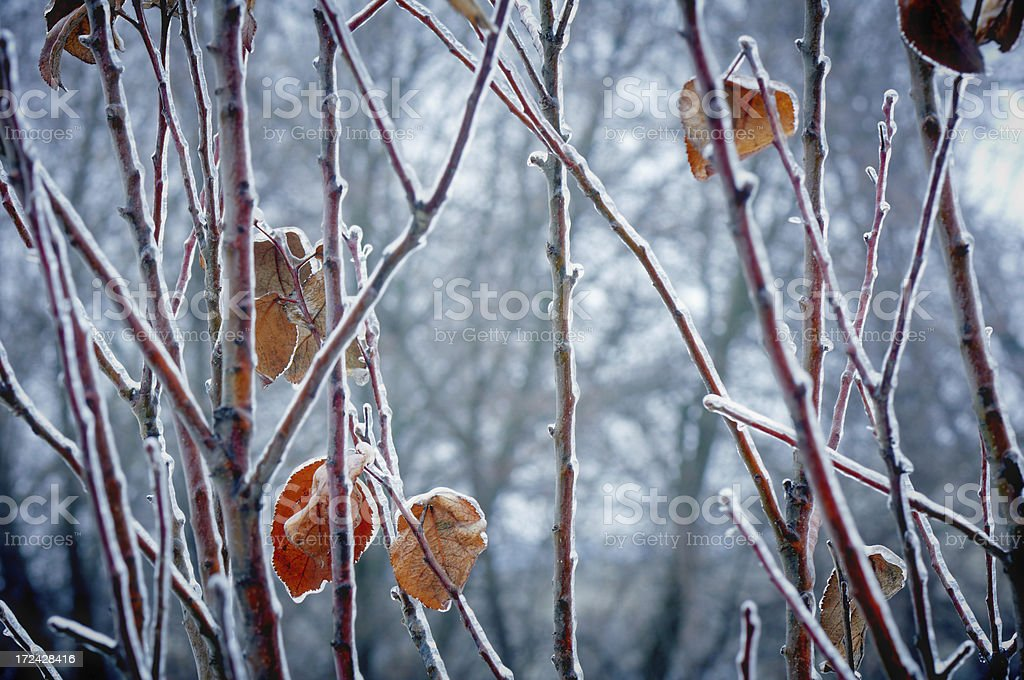 Tree branch covered with ice royalty-free stock photo