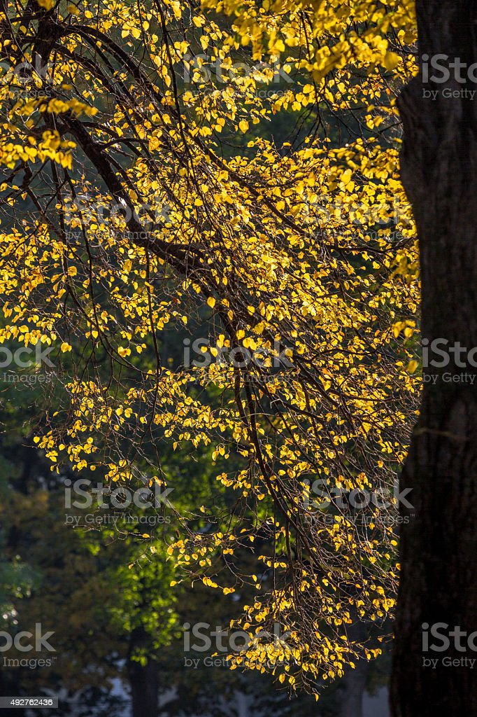 Tree Branch in Fall stock photo
