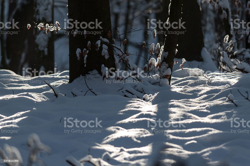 tree branch in snowscape stock photo