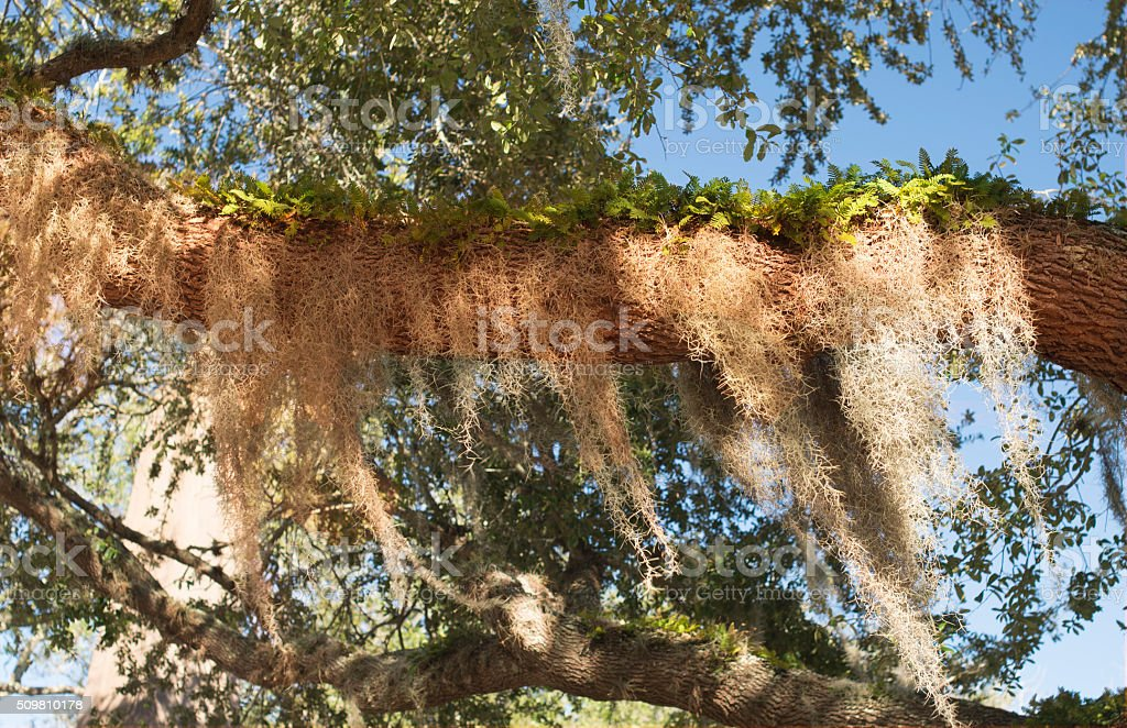 Tree branch overgrown with fern stock photo