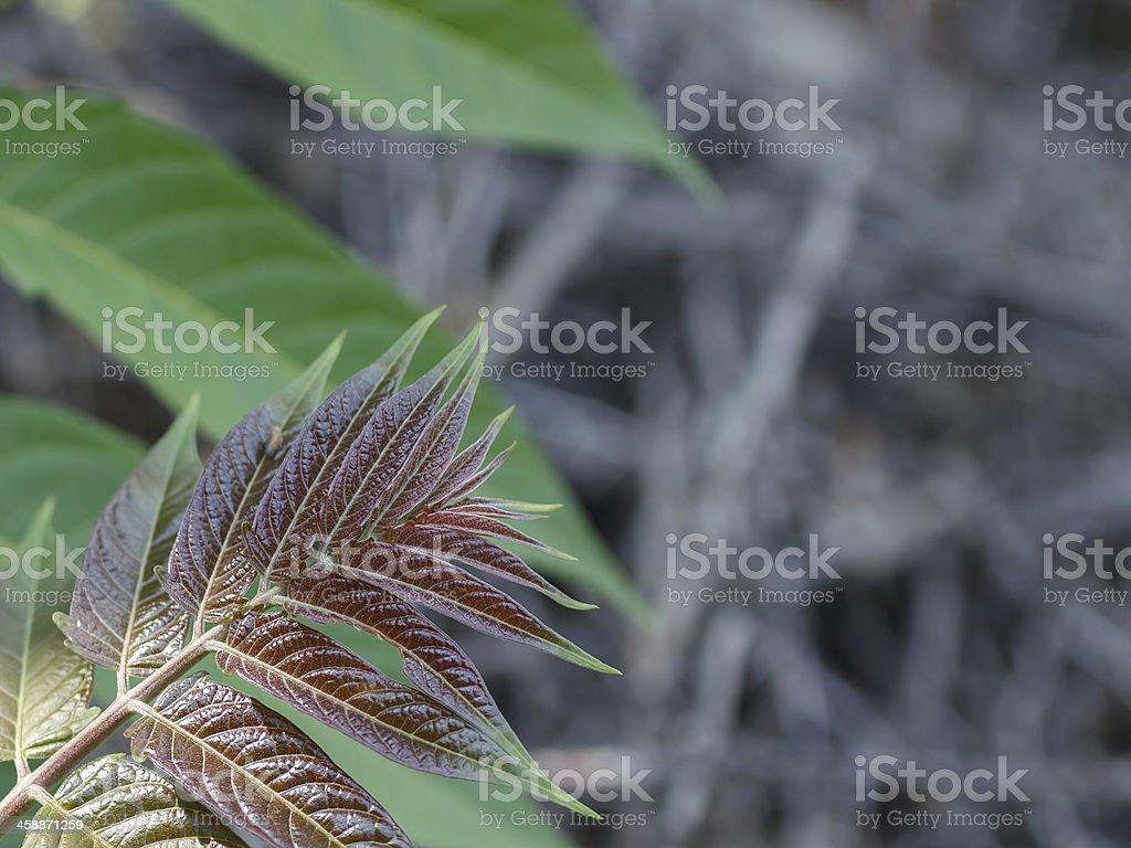 tree branch royalty-free stock photo