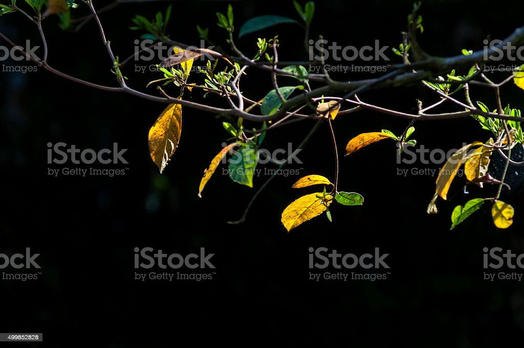 Tree branch royalty-free stock photo