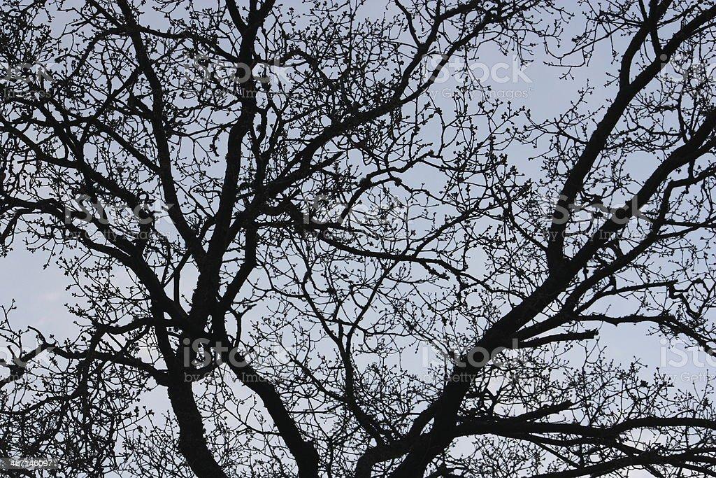 Tree branch silueta foto de stock libre de derechos