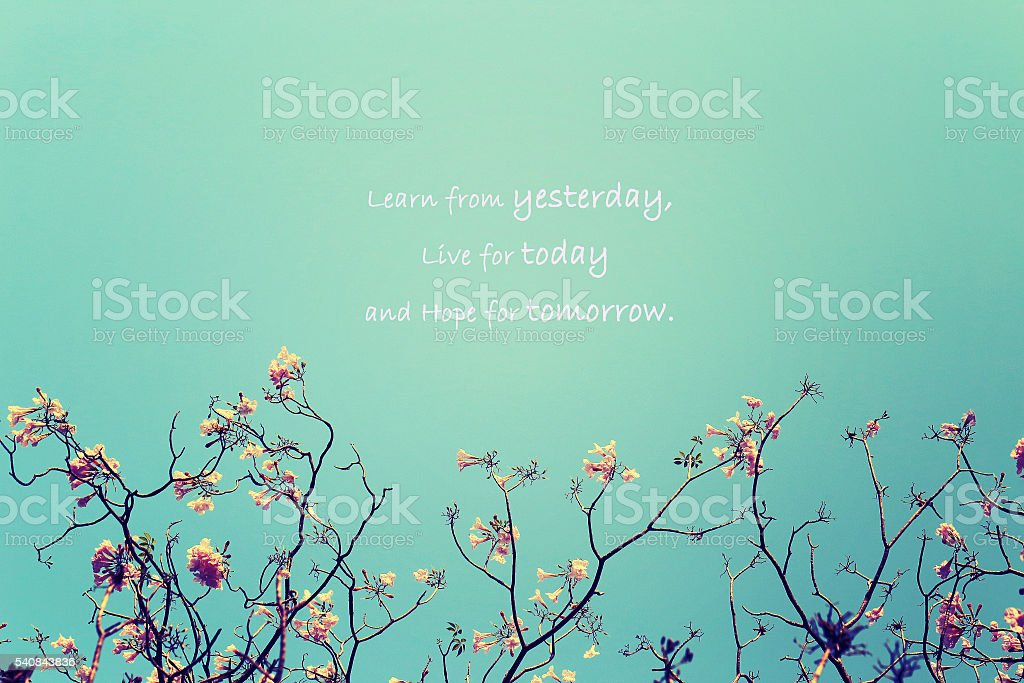 Tree branch with pink flowers background with Inspirational Typographic Quote. stock photo