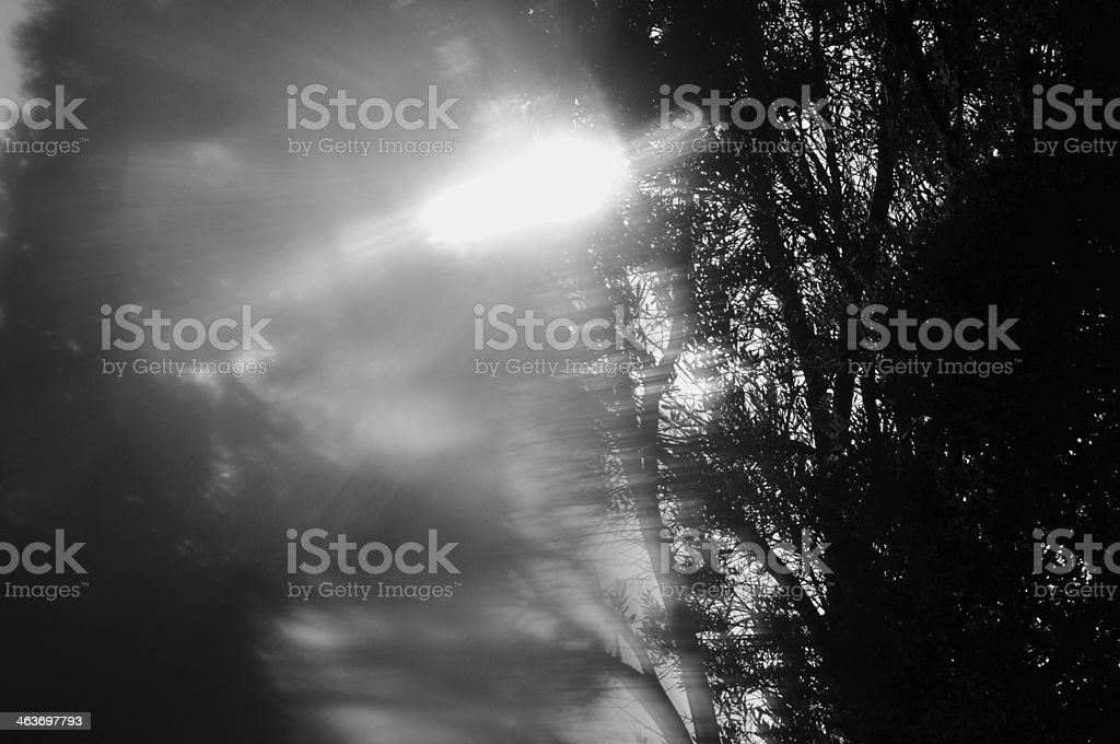 tree branches abstract blur royalty-free stock photo