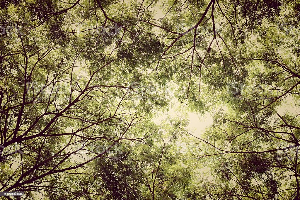 Tree branches and green leaf background, Safe the earth stock photo