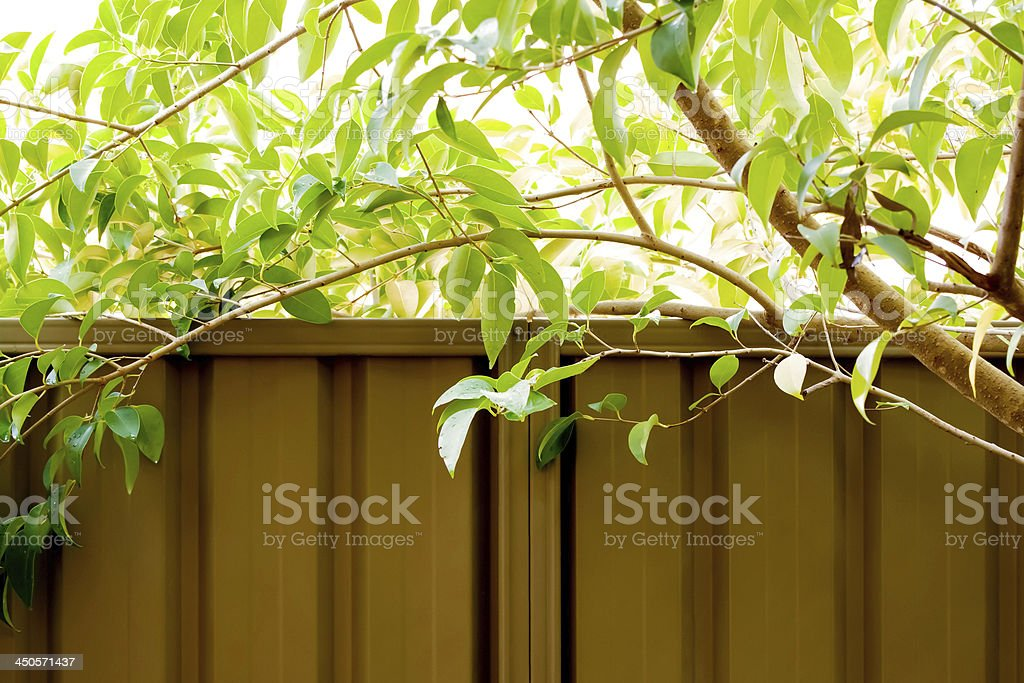 Tree branches  and metal fence, copy space royalty-free stock photo