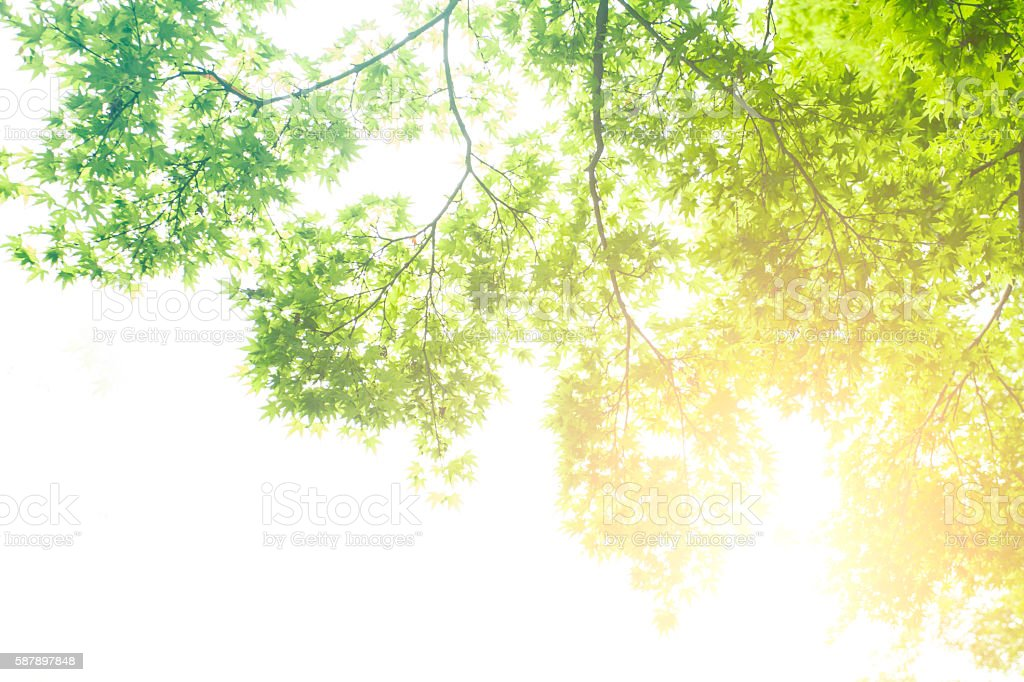 Tree branches and sunlight stock photo