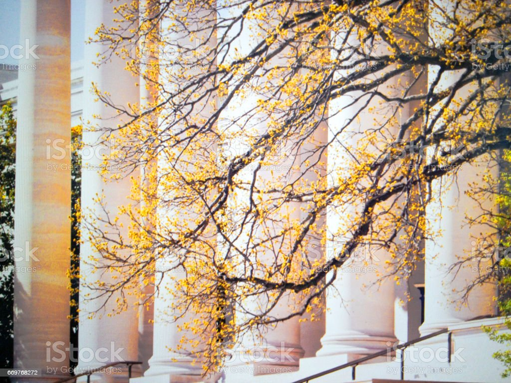Tree branches in front of building with Doric Greek columns stock photo