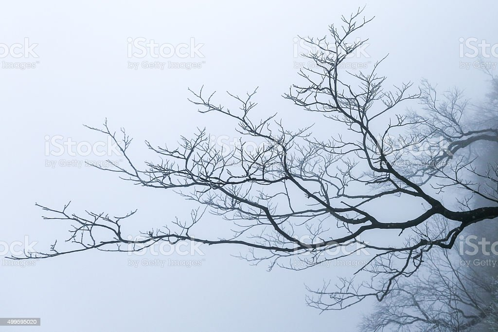 Tree Branches in Winter stock photo