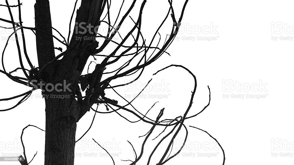 Tree branches isolated on white stock photo