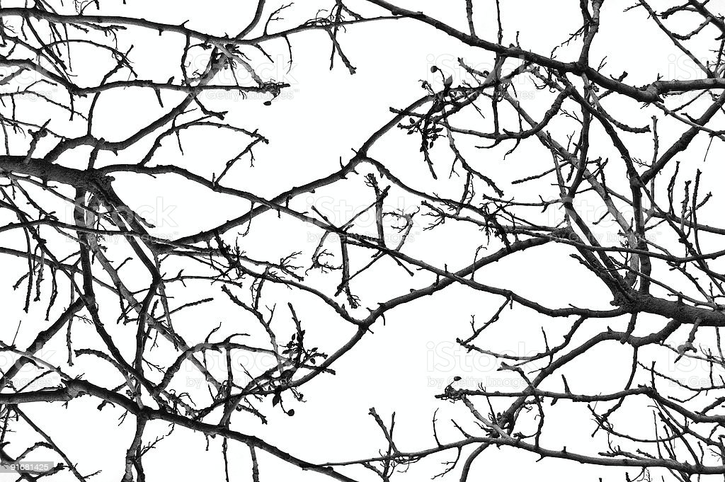 tree branches pattern royalty-free stock photo