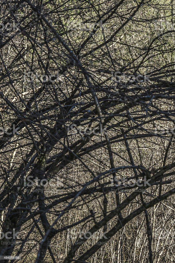 tree branches stock photo