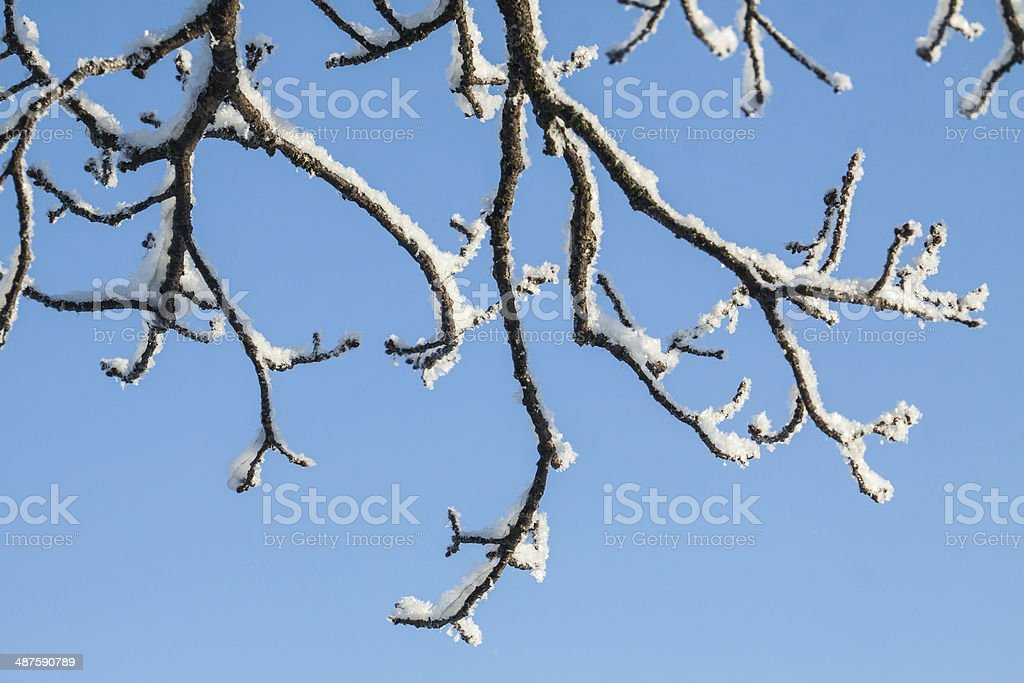 Tree branches royalty-free stock photo
