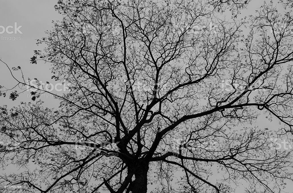 Tree branches silhouette stock photo