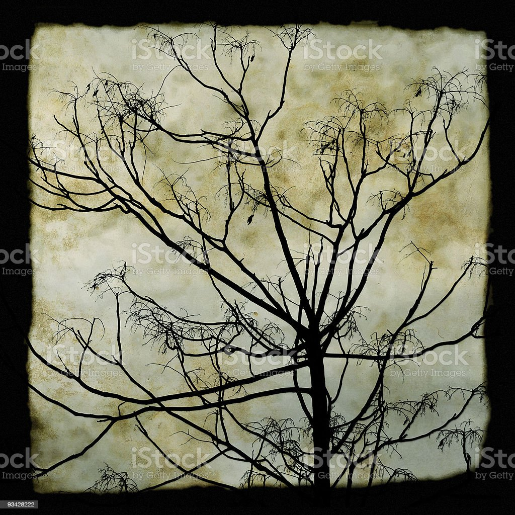 tree branches silhouette royalty-free stock photo