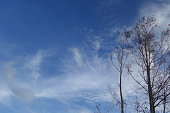 Tree branches with clear blue sky background