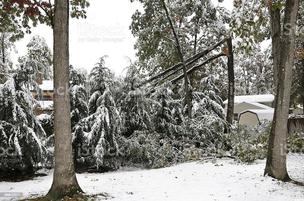 Tree broken by heavy snow stock photo