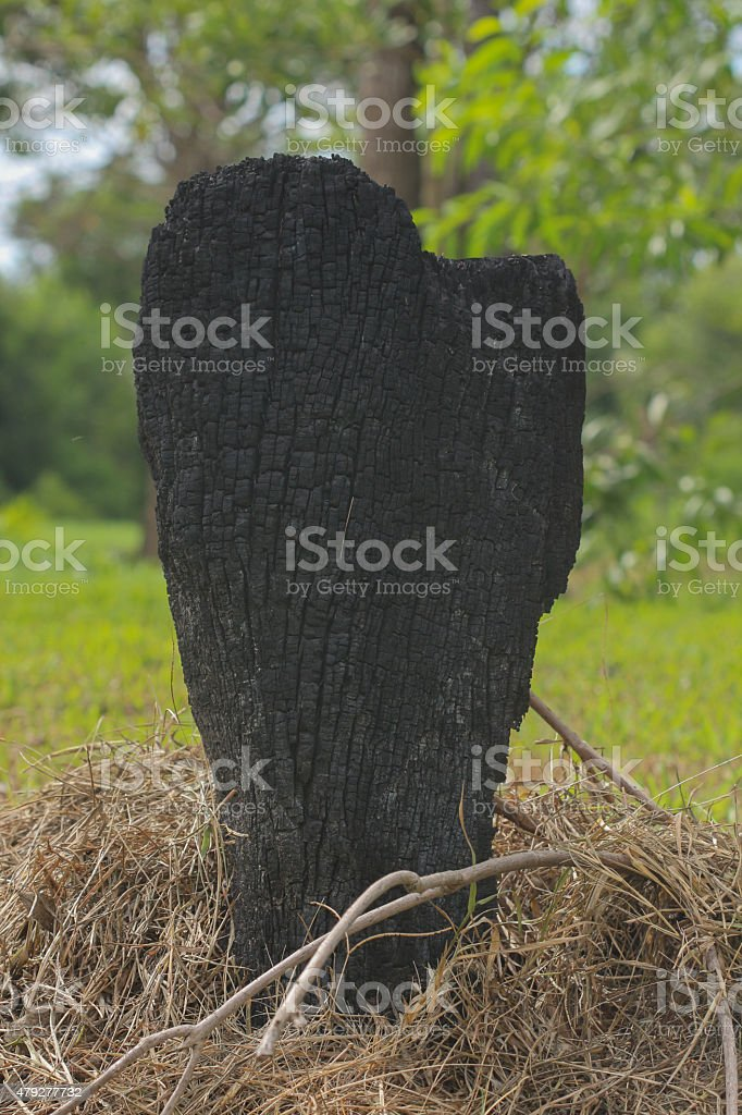 Tree Burned stock photo