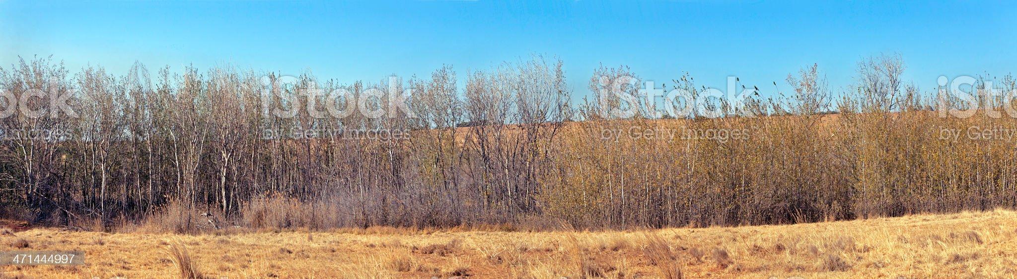 Tree Bush autumn panaroma royalty-free stock photo