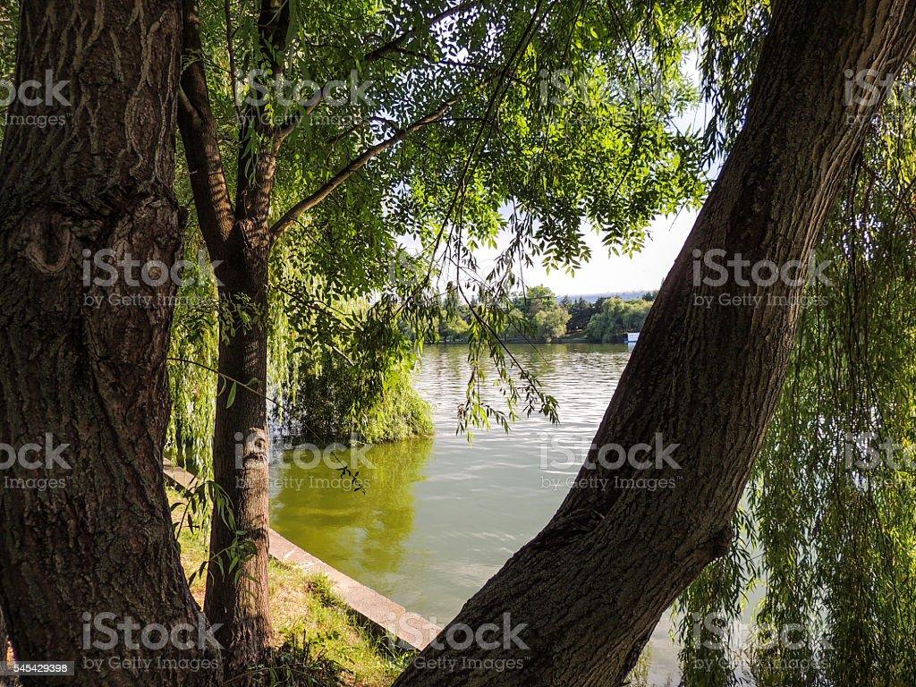 Tree by a lake stock photo