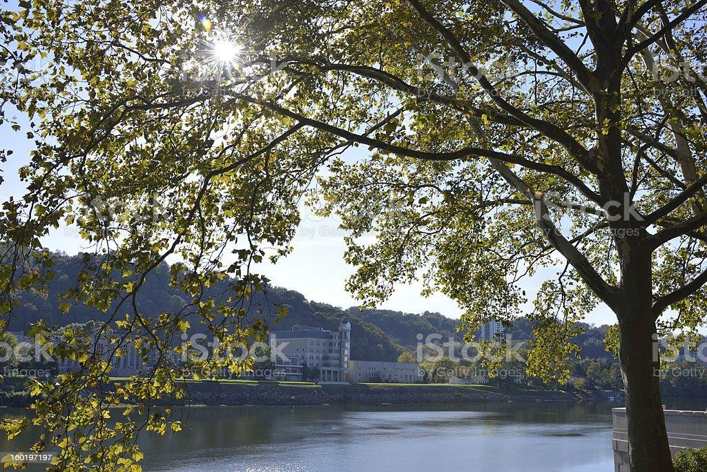 Tree by Kanawha River stock photo