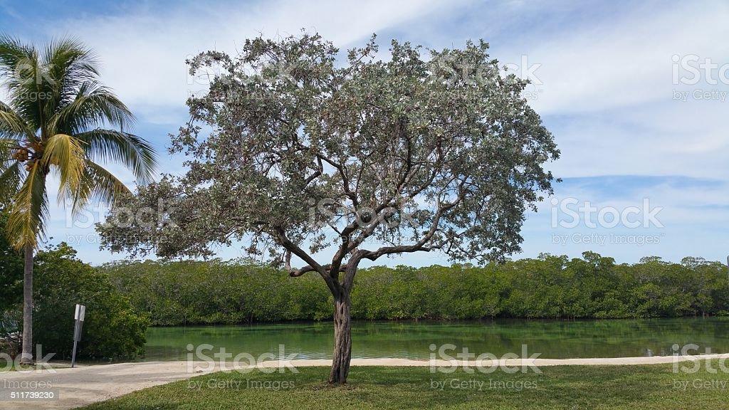 Tree by lake stock photo
