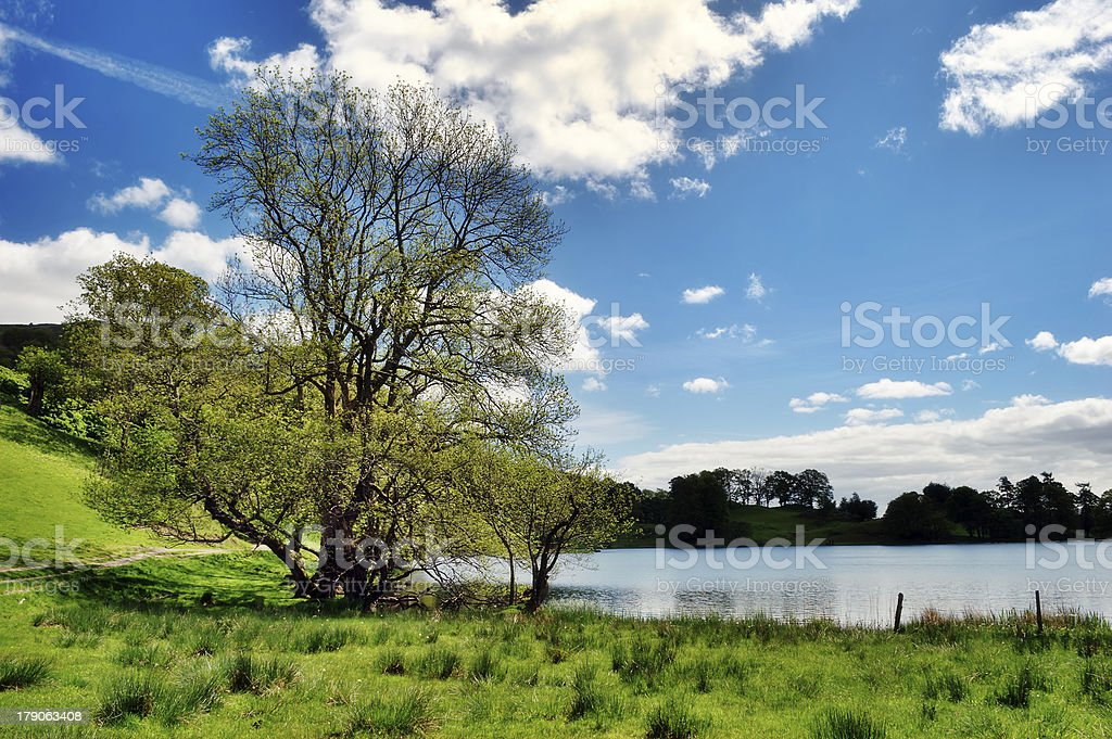 Tree by the edge of Loughrigg Tarn stock photo